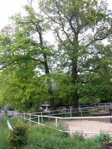 BäumeReiterhof